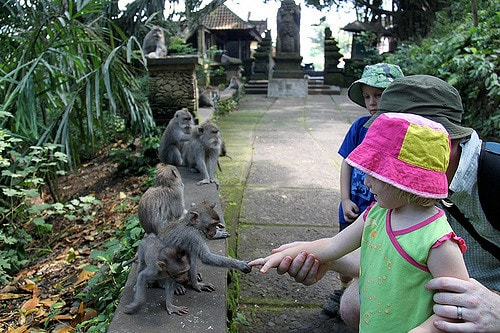 house-hunting-and-returning-to-ubud-after-10-years-5-min