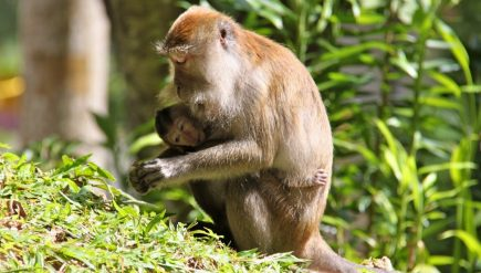 adventures-with-primates-and-lessons-in-avoiding-monkey-bites-1-min