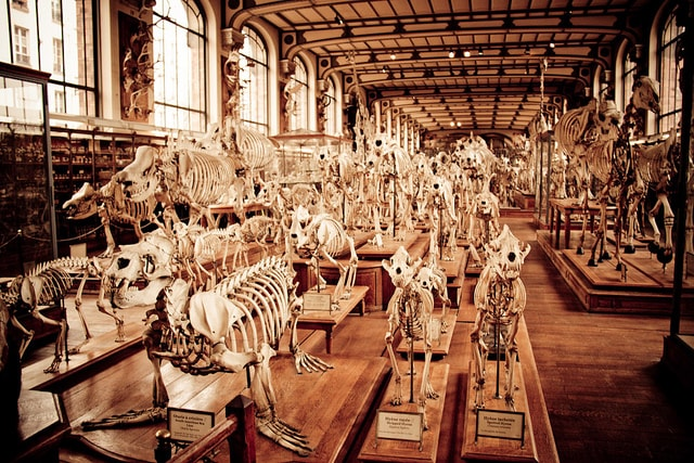 the-bone-room-museum-of-comparative-anatomy-paris-2