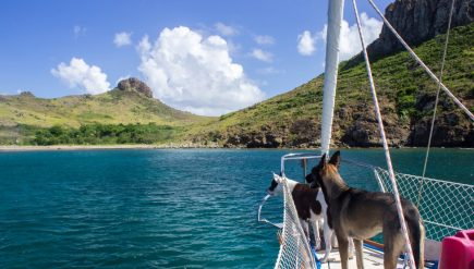 thing-to-keep-in-handy-when-cruising-with-a-pet-dog-1