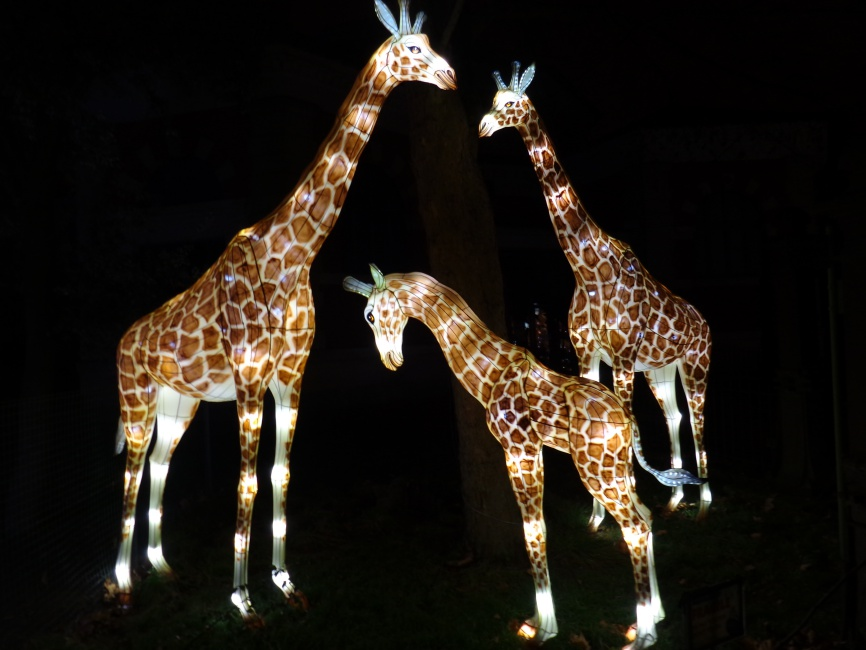 giraffe lighting